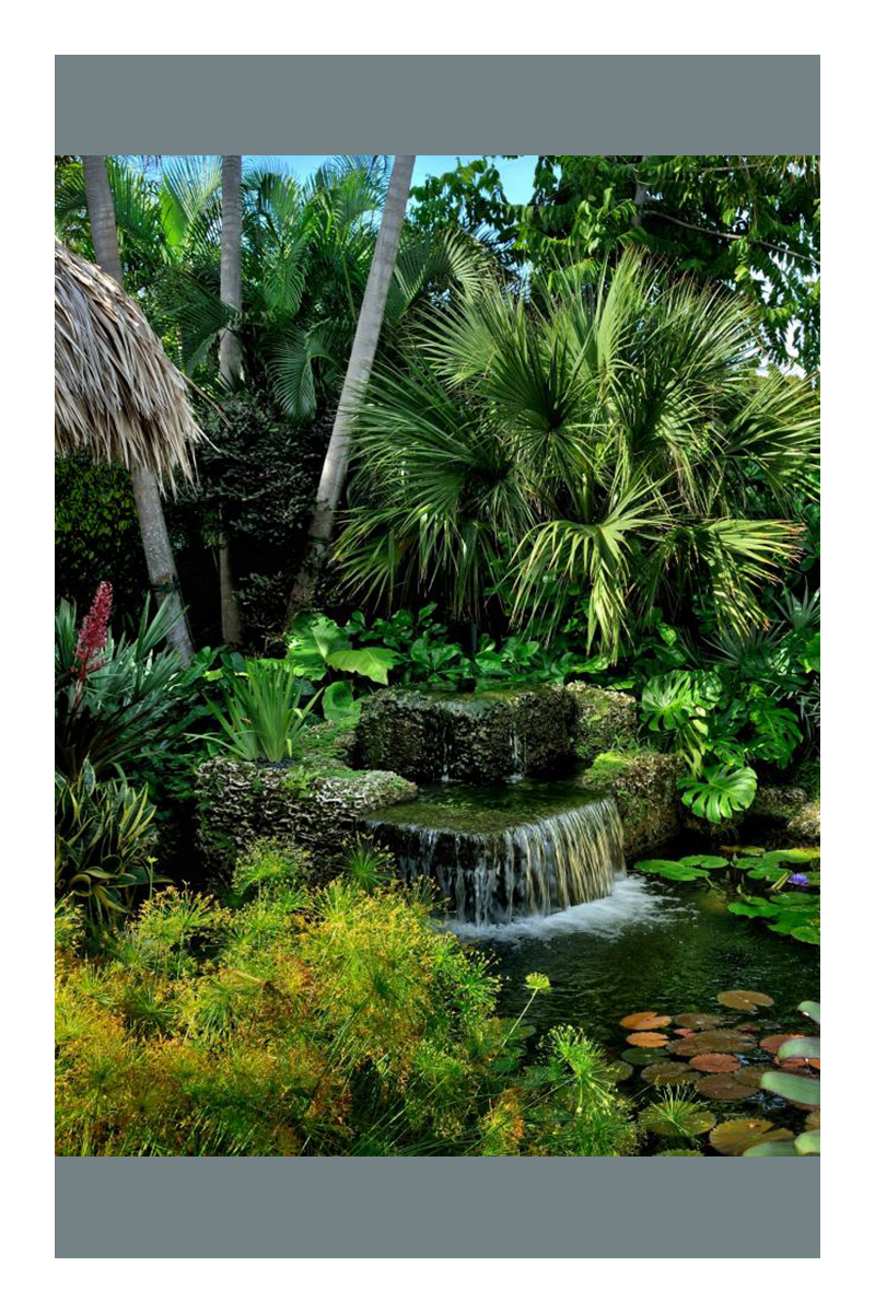 tropical garden plant ideas