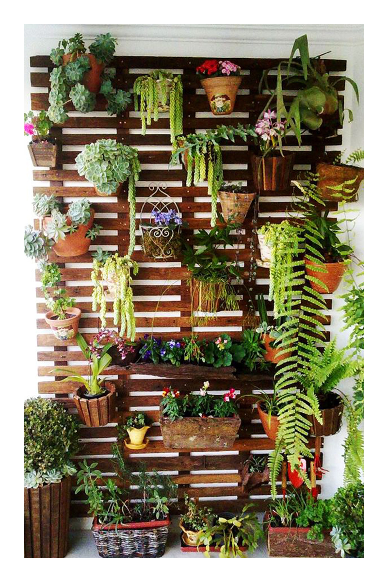 home tropical garden ideas