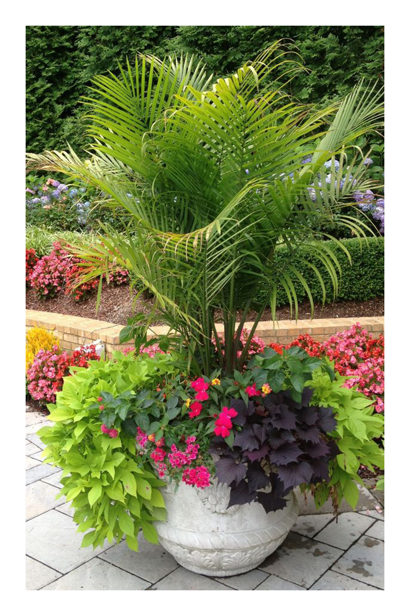 tropical garden ideas colorado