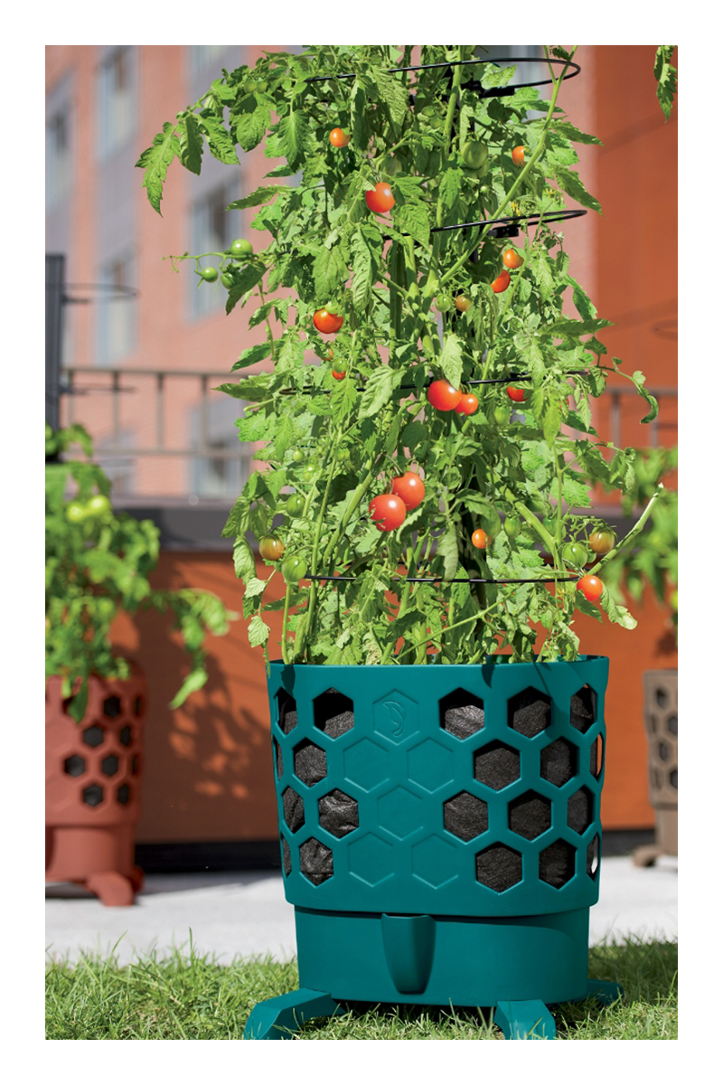 best tips for growing tomatoes in pots