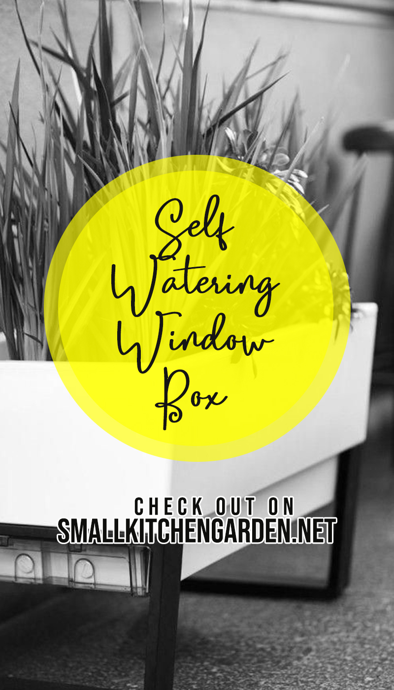 30 Neat and Beautiful Self Watering Window Box